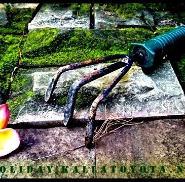 berkebun dilahan sempit dan manfaatnya
